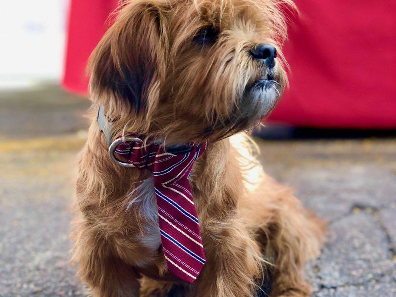 WoofWare.com Handmade Dog Collars